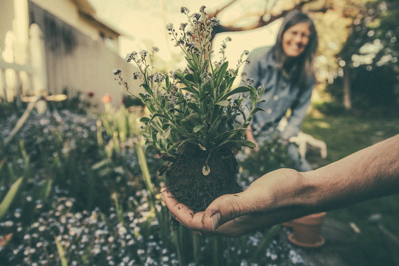 Gardening – An Introduction